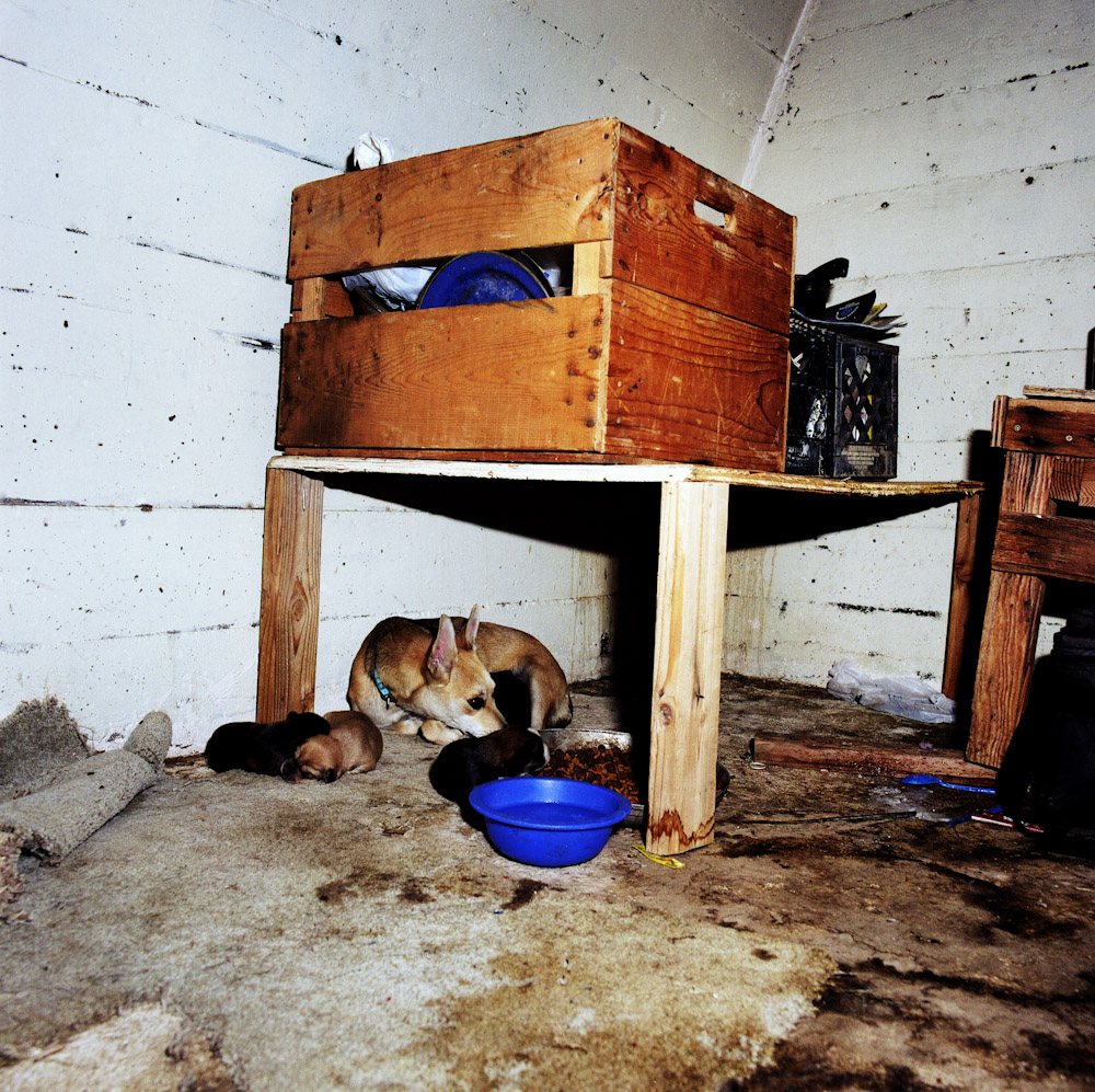Few domestic amimals are steralised in Slab City, so there are a lot strays as breeding happens unchecked. Occassionally a volunteer Vet will steralise some of the animals.