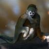 _macaco_de_cheiro-13