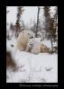 Polar bear twins playing
