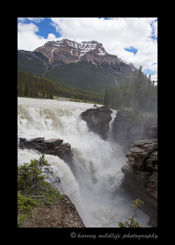 Photograph of Athabasca Falls in Jasper National Park, Alberta, Canada