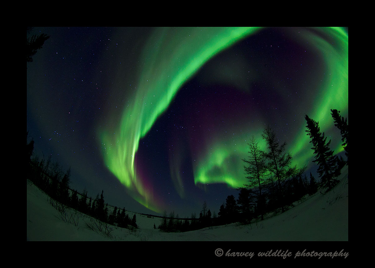 Northern Lights circle over a lake in Wapusk National Park. Photograph by Harvey Wildlife Photography