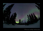Aurora Borealis in Wapusk National Park. Photograph by Harvey Wildlife Photography.