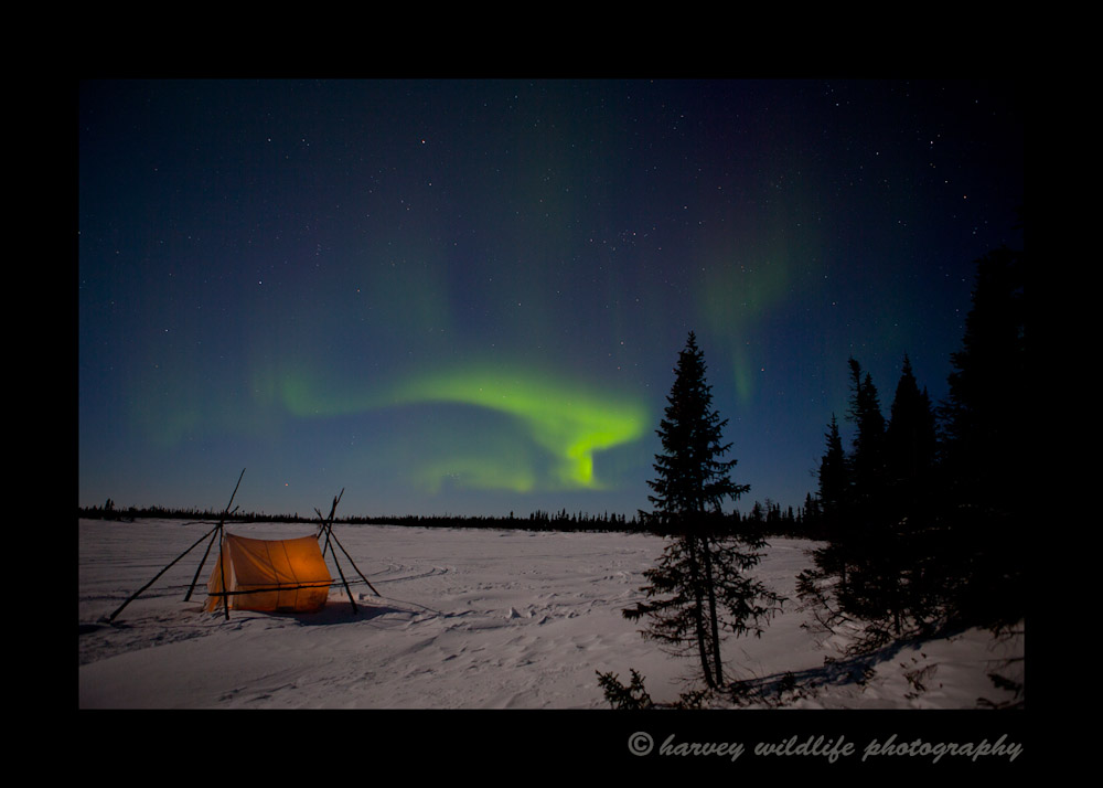 Aurora_borealis_tent_2
