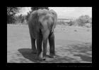 baby elephant David Sheldrick Wildlife Trust