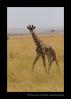 Baby-giraffe-IMG_7029