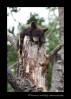 Bear_cub_and_squirrel