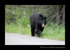 Black-bear-mom3S2Y5255