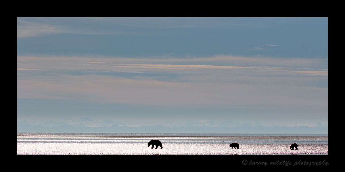 Brown Bear Family Silouette