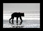 Brown Bear Silhouette