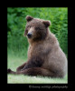 Brown-bear-on-the-lawn