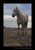 Photograph of a Camargue horse with a blue sky in the background in Southern France.