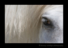 Picture of a Camargue horses eye. Photographed in the Camargue region of Southern France.