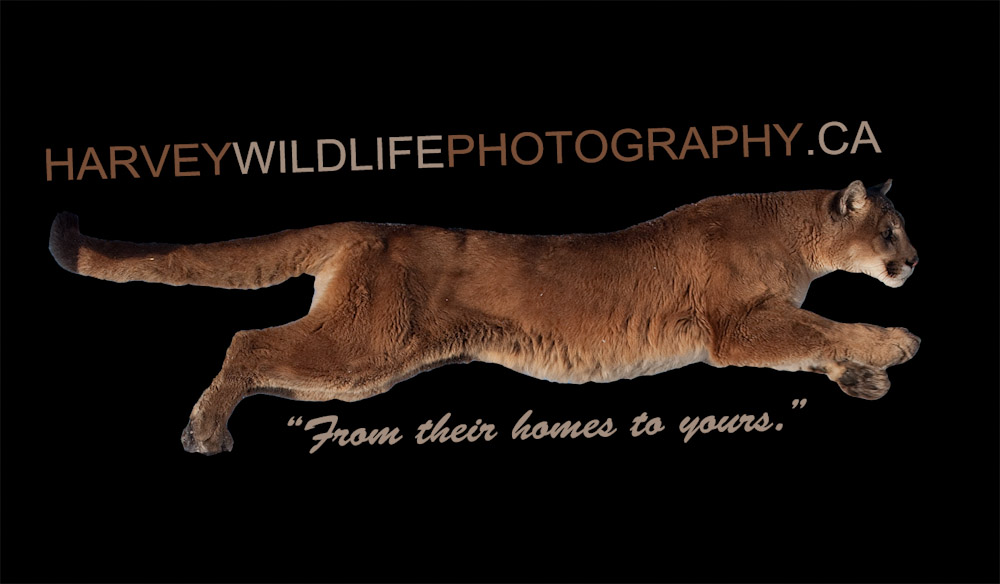 Harvey WIldlie Photography Logo