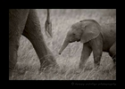 Mother and Baby Elephant Masai Mara 2018