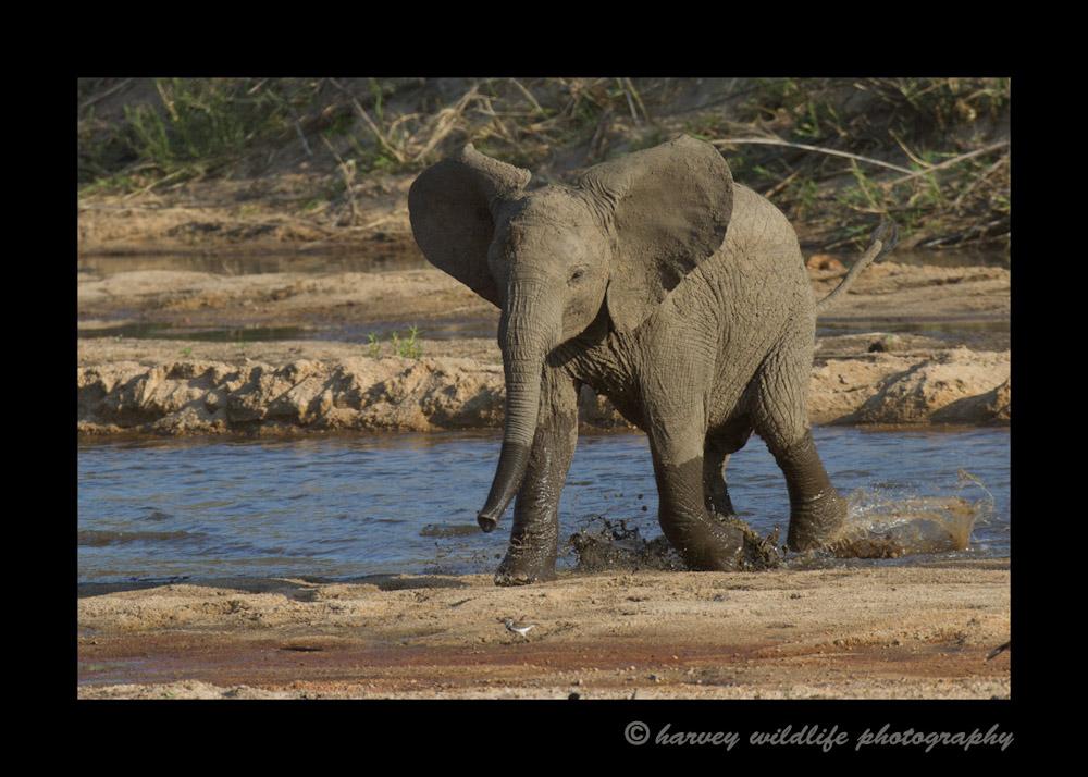 Elephant_IMG_0552