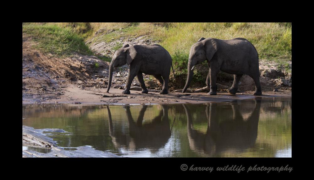 Elephants_IMG_9237
