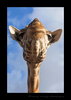 Giraffe in the Sky