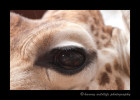 If you look into the eye of the giraffe (Kelly) you will see the reflection of the Giraffe Manor.