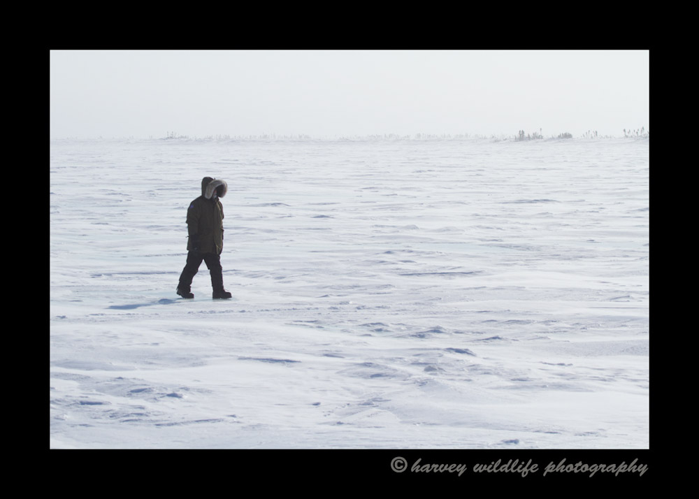 One of the photographers goes for a short walk on the tundra as we wait for hours at a polar bear den waiting for a glimpse of a polar bear and or cubs.