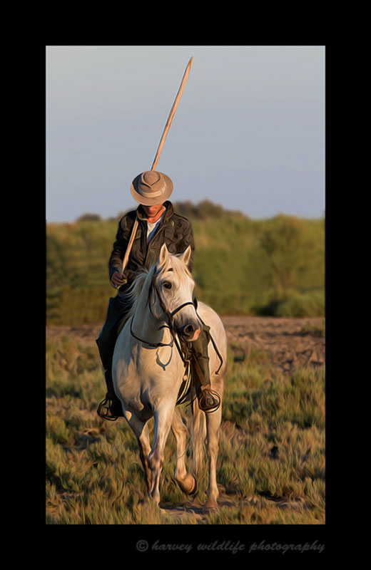 Picture of a French Guardian on a Camargue horse in Southern France. Photo by Harvey Wildlife Photography. This image has been edited to resemble an oil painting.