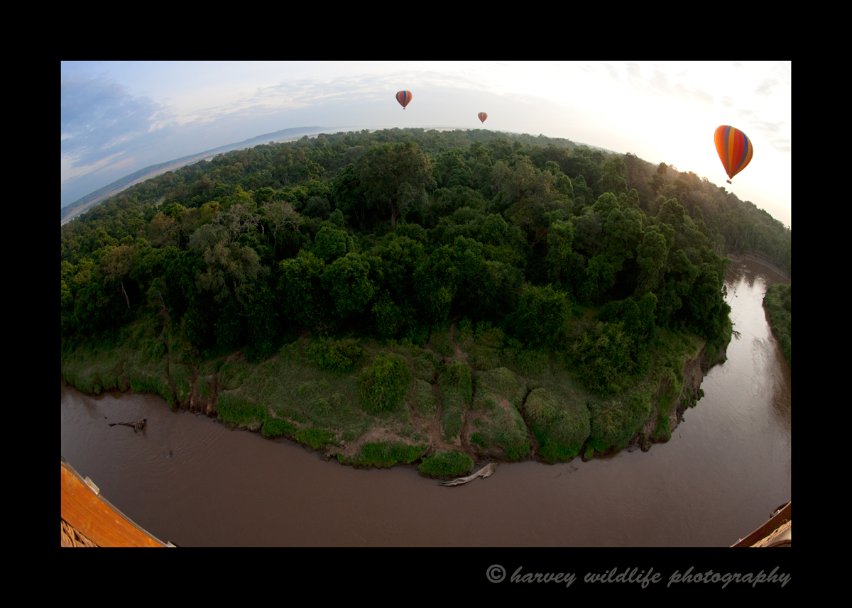A great way to enjoy the Masai Mara is by floating 60' over top of it.