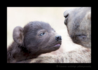 Hyena cub and mom, Masai Mara, HW Safaris