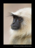 We came across this langur monkey in Pench National Park. He was kind enough to pose for us.