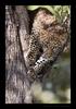 Leopard Male Cub 2018