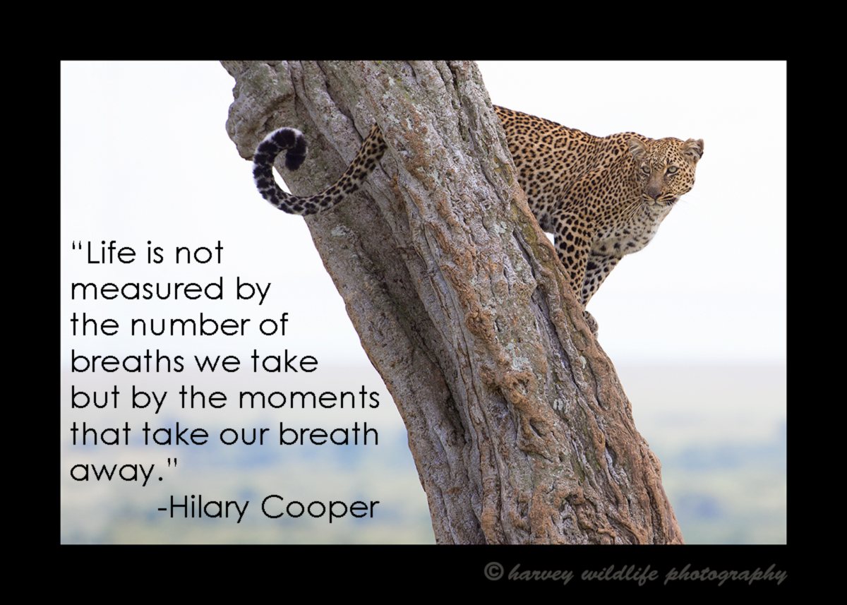 Life is not measured Leopard