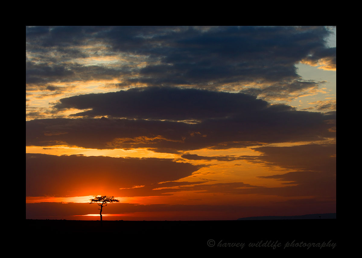 Masai Mara Sunset picture with Acacia Tree