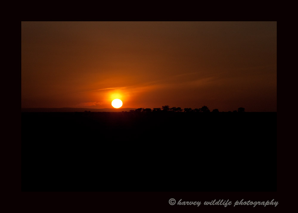 Leaving early in the morning we catch the Masai Mara sunrise as we head out on safari.