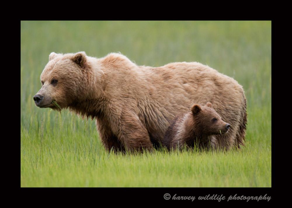 Mom and cub 1