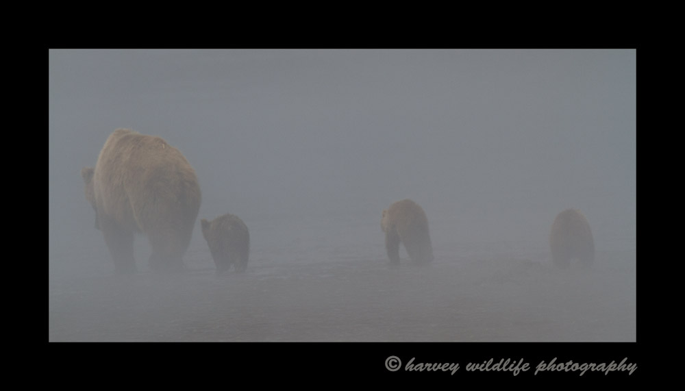 Mom-and-triplets-in-the-fog