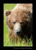 Momma Brown Bear