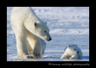 Nanook_Mom_and_Cub