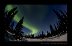 Northern Lights trails in a forest in Wapusk National Park. Photograph by Harvey Wildlife Photography.