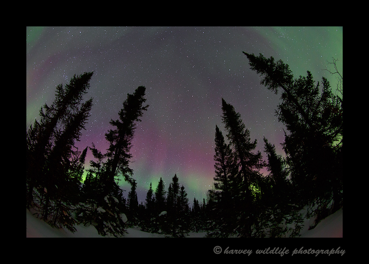 Northern_lights_reds_2015