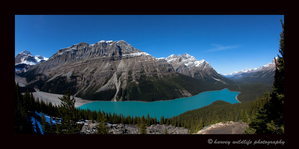 Peyto Lake is just off the Jasper- Banff highway. There is a look out point at the end of a steep trail just ten minutes from the parking lot.