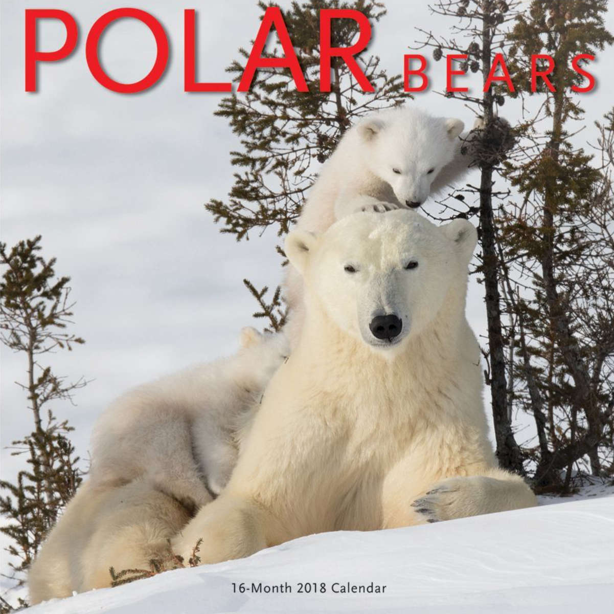 Canadian Geographic Calendar.  Cover Polar Bears