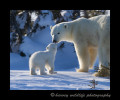 Picture of a polar bear mother and cub touching noses.