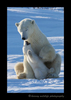 Polar_bear_mom_and_cub_playing