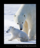 Polar_bear_mom_and_cub