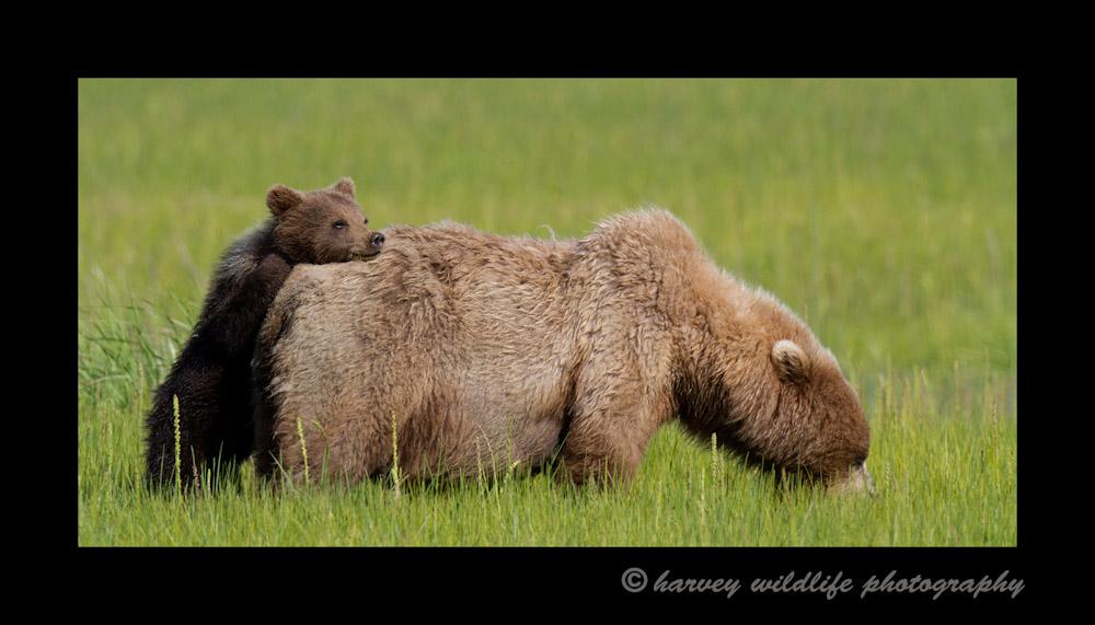 Resting-on-Mom