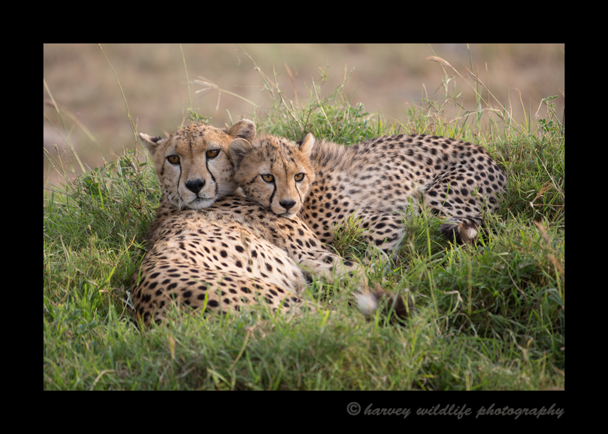 Sierra-and-Cub-Relaxing