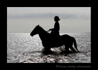 Picture of a silhouette Camargue horse in the delta in Southern France