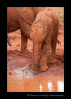 Sities is an orpaned elephant living at the Daphne Sheldrick Elephant sanctuary.