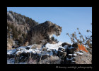This snow leopard is a wildlife model living in Montana.