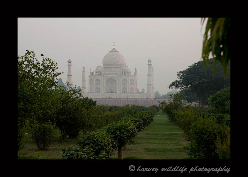 We were really excited to get to the Taj Mahal to photograph it from across the river. Unfortunately by the time we go there, we had lost that nice evening light, the river was low and the grounds across the river are quite junky looking, so this was the only image that I managed to salvage.