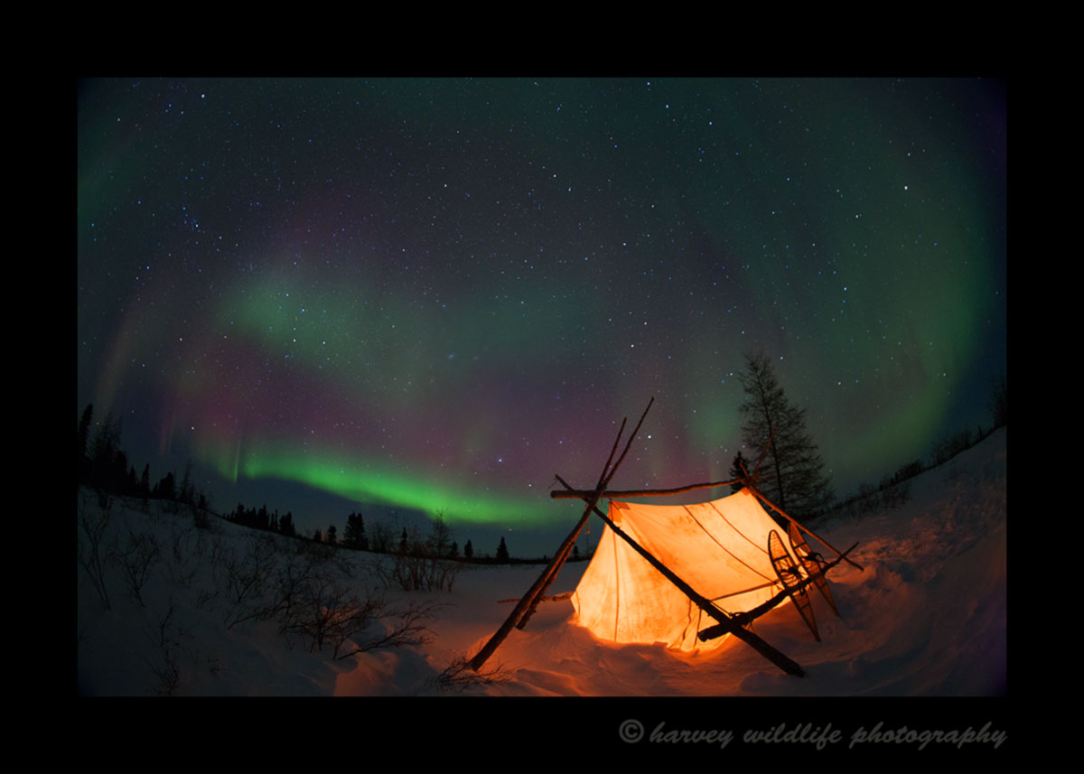 A tent is illuminated in the foreground as the northern lights shine in the background in Wapusk National Park, Manitoba, Canada