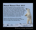 polar bear moms and cubs home page, 2013